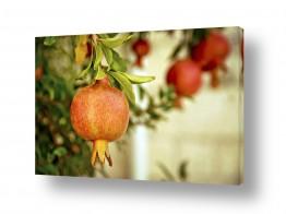 אוכל פירות | רימונים