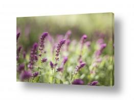 צילומים צילום תקריב   פרחים ורודים