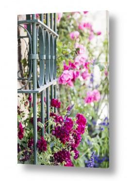 טבע דומם חלונות |  חלון עם פרחים
