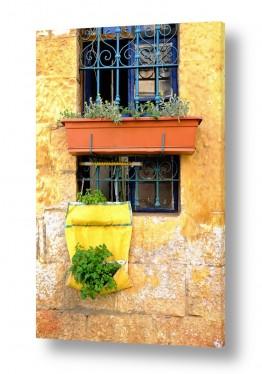פטרוזיליה בחלון