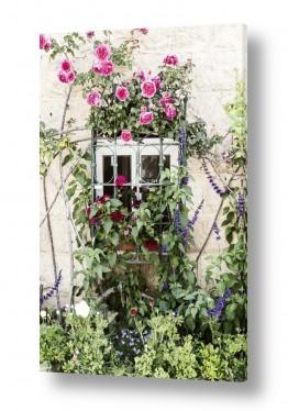 ערים בישראל ירושלים | חלון עם פרחים #2