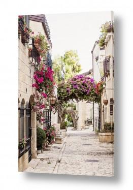 צמחים פרחים | סמטה במשכנות שאננים