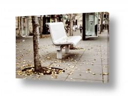 טבע דומם ספסלים | ספסל בסתיו