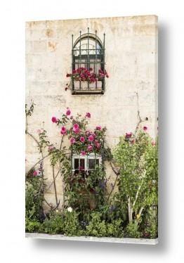 תמונות לפי נושאים פרחוני | חלון עם ורדים