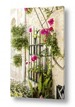 תמונות לפי נושאים פרחוני | ורדים בחלון