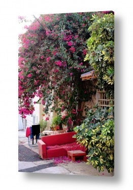 צילומים ויויאן נתן   הספה האדומה