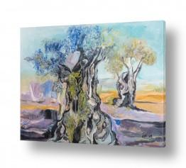 עץ עץ זית | שיחת זיתים