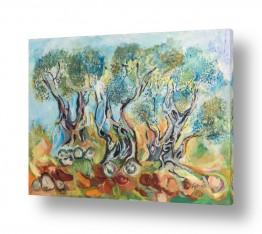 עץ עץ זית | עצי זית באדמה סלעית