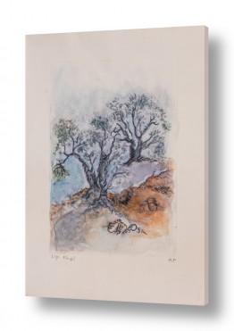 עץ עץ זית | רישום עץ זית